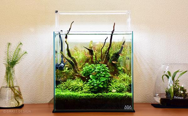 30cmキューブ水草水槽
