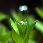 水草が気泡や水滴でドレスアップした姿に思わずウットリ。