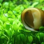 なぜADAは石巻貝を水槽に入れないのか?