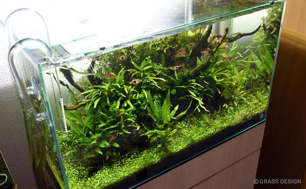 【悲報】IAPLC 2015☆ADA世界水草レイアウトコンテストを棄権。
