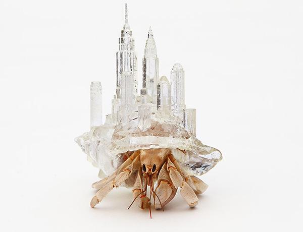 世界を股にかけるヤドカリ!?3Dプリントされたヤドカリの殻がすごすぎる!