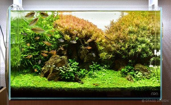 60cm水草水槽レイアウト