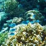 たまらなく美しすぎる青の景色。沖縄美ら海水族館その1