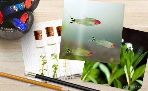 熱帯魚・水草の写真プリント