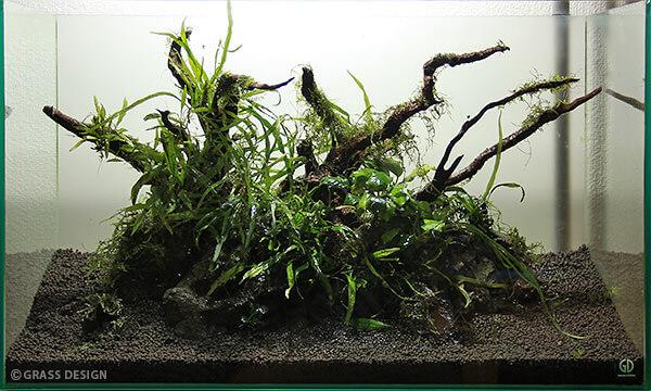 60cm水槽で水草レイアウト!佗び草と流木で構成