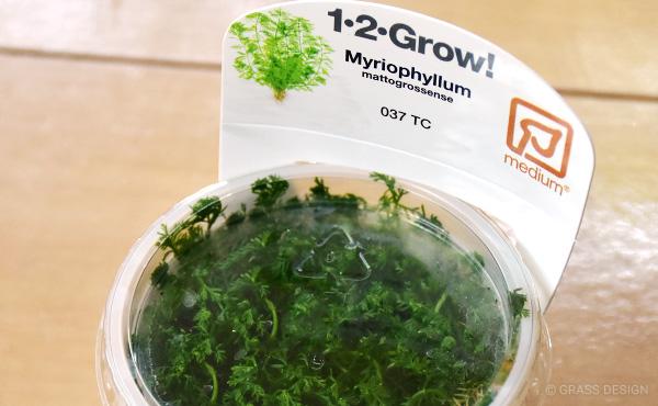1・2・Grow! ミリオフィラム・マトグロッセンセ