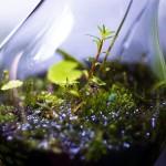 電球テラリウムの作り方☆水草と苔を使って10分で完了!
