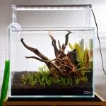 小型水槽を立ち上げよう!流木+水草レイアウト