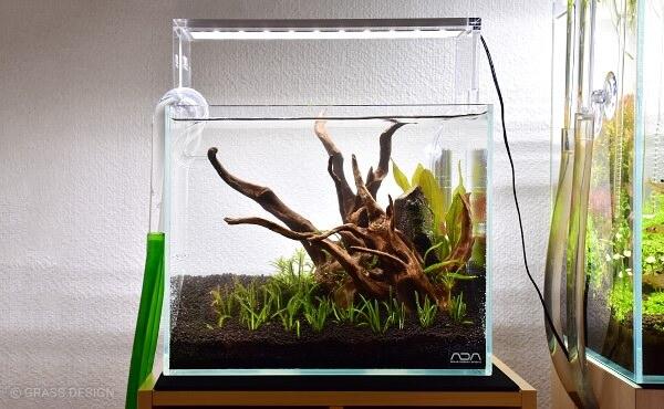 小型水槽の水草レイアウト