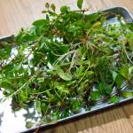 あなたは幾つ分かる?この水上葉は何の水草??