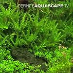 小型水槽のレイアウト参考に!超絶ハイレベルな水景集。(動画)