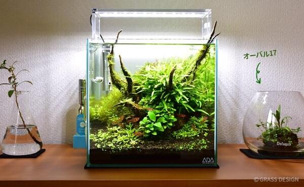 30cmキューブ水槽とプラントグラスオーバル17