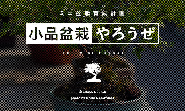 新企画☆種から育てる「ミニ盆栽」を始めてみよう!