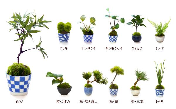 CUPBON 植物ラインナップ