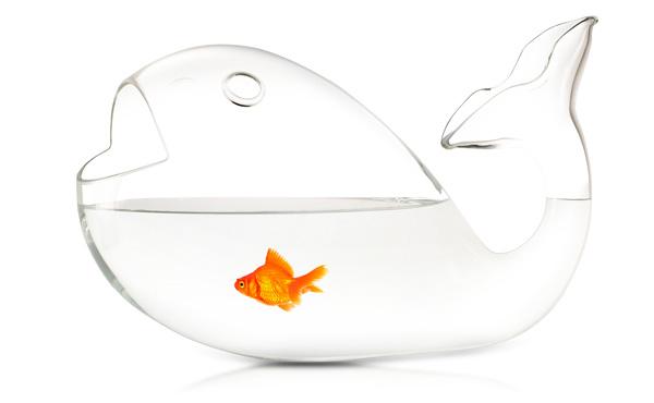おしゃれでかわいい金魚鉢。アイデアが面白くてGoodです!