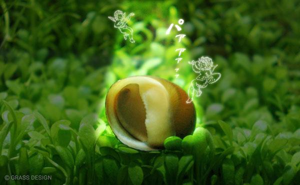 天に召される石巻貝