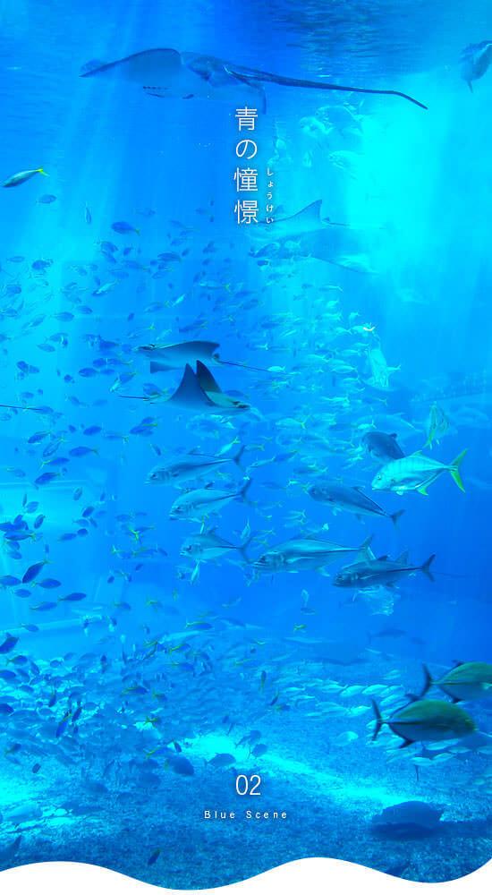 美しい幻想的な青の世界。沖縄美ら海水族館その2