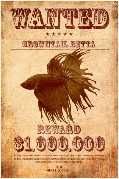 wanted-betta