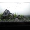 #073 石組みレイアウトにレッドテトラを泳がせてみる。