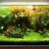 ミリオフィラム系の水草が溶ける・枯れる原因